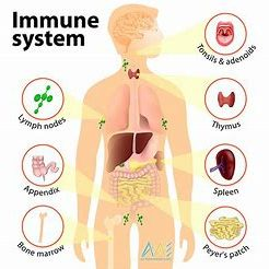 Immune System Infographic