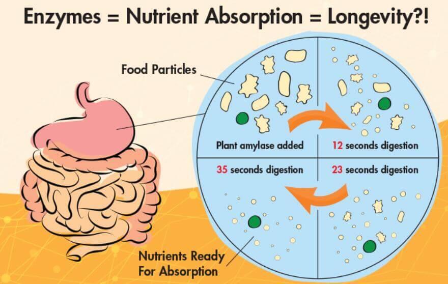 Elite Health Tip - Digestive Enzymes