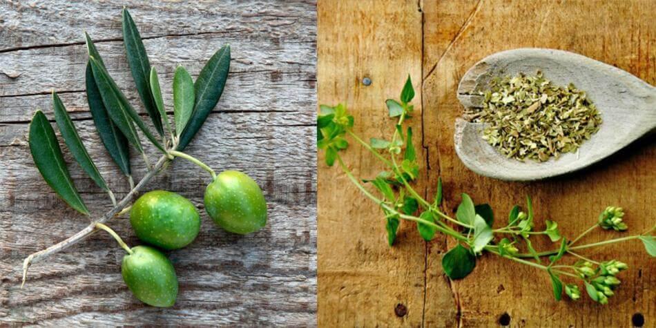 Elite Health Tip- Oregano and Olive Leaf